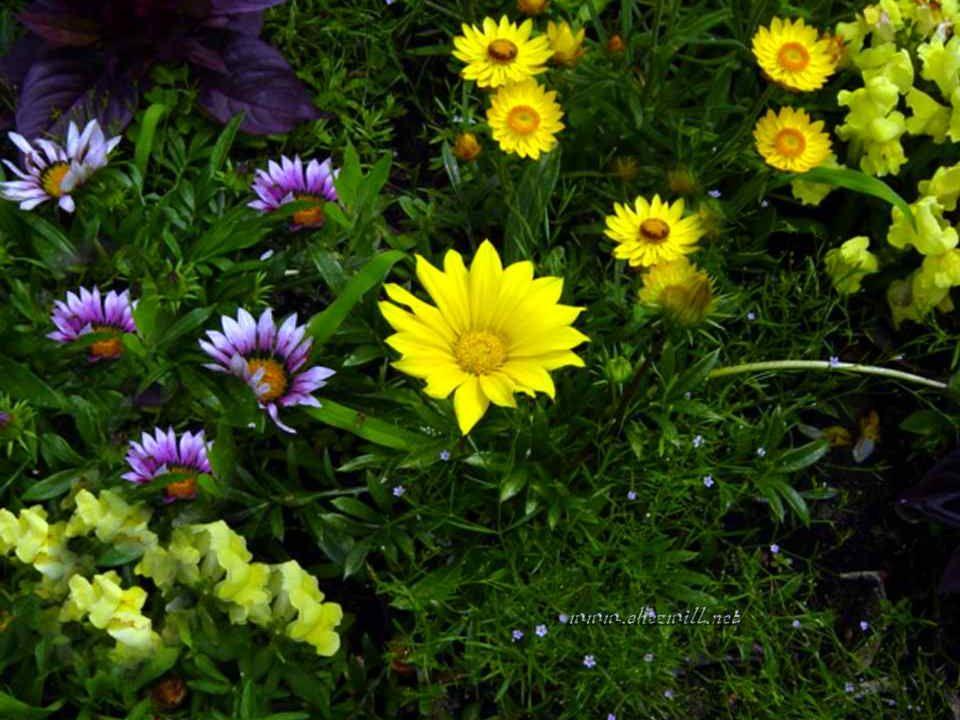 Aimer c'est être pur comme la fleur des bois;