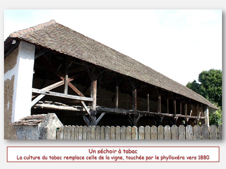 Un séchoir à tabac La culture du tabac remplace celle de la vigne, touchée par le phylloxéra vers 1880.