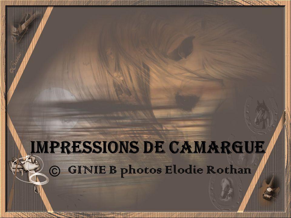 Impressions de Camargue © GINIE B photos Elodie Rothan