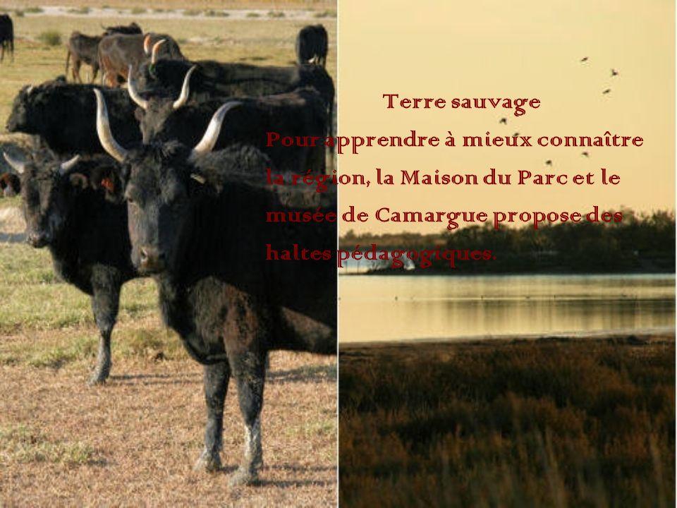 Terre sauvage Pour apprendre à mieux connaître. la région, la Maison du Parc et le. musée de Camargue propose des.
