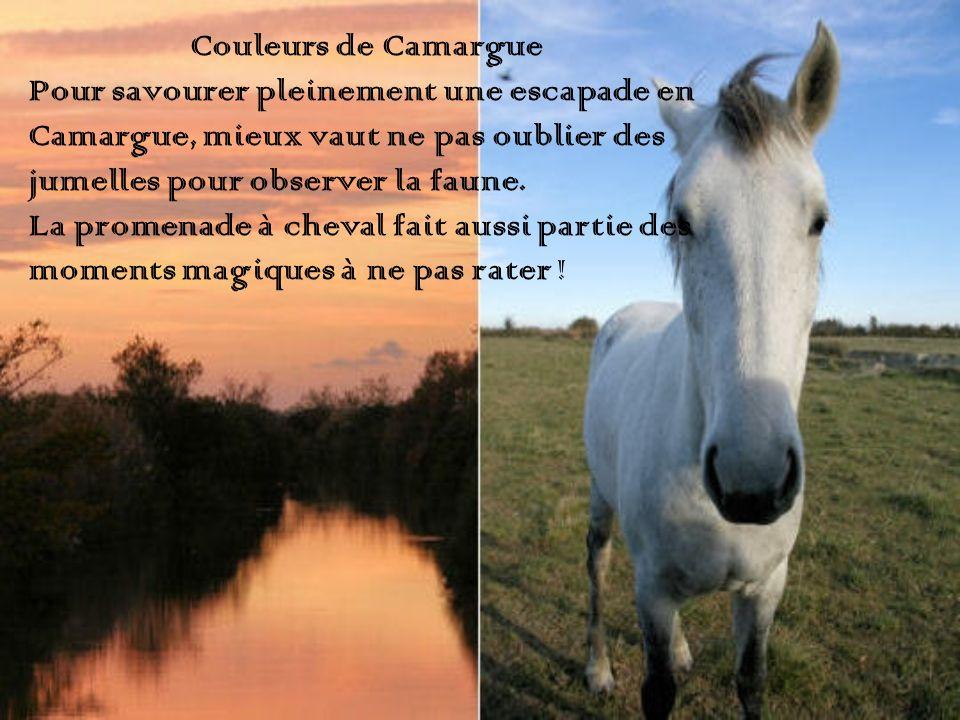 Couleurs de Camargue Pour savourer pleinement une escapade en. Camargue, mieux vaut ne pas oublier des.