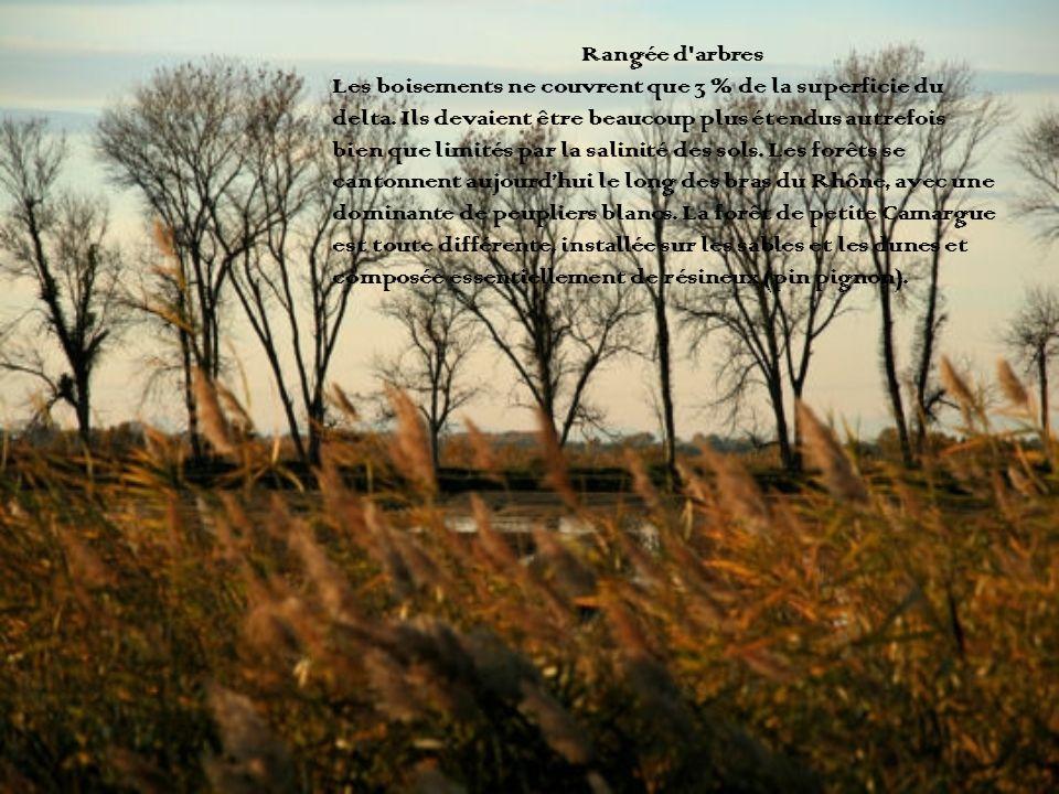 Rangée d arbres Les boisements ne couvrent que 3 % de la superficie du. delta. Ils devaient être beaucoup plus étendus autrefois.