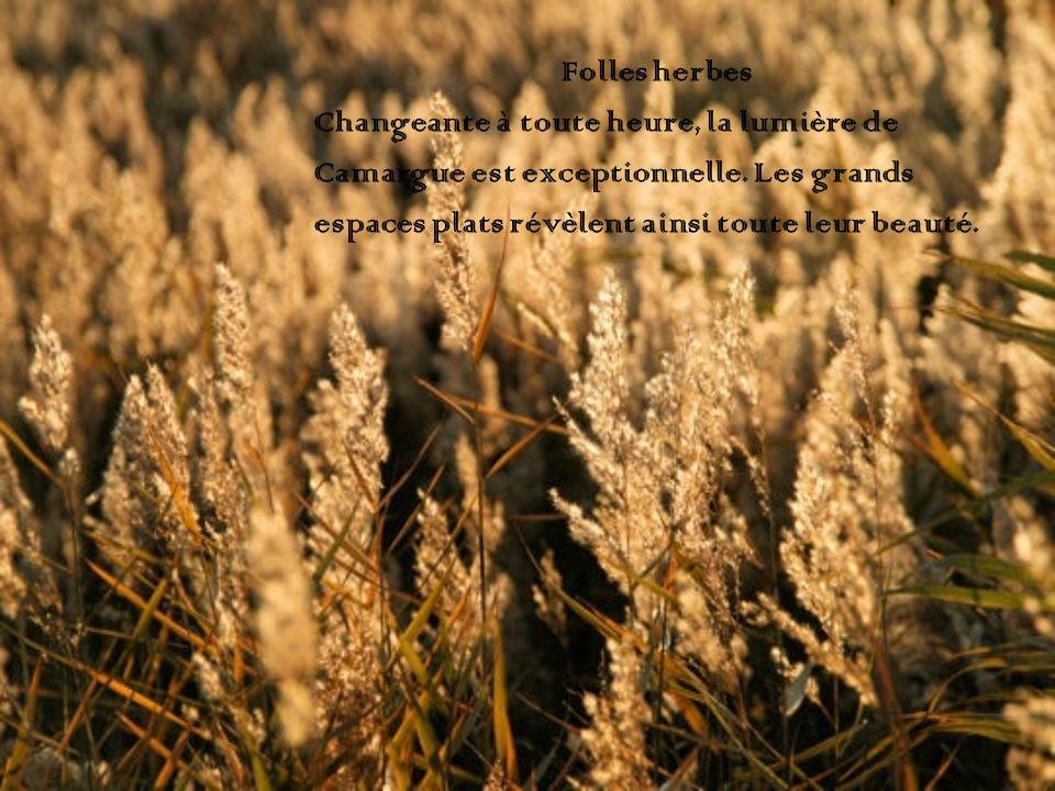 Folles herbes Changeante à toute heure, la lumière de.