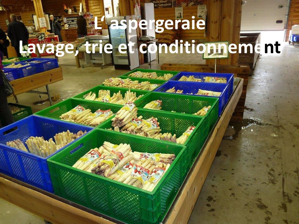 L' aspergeraie Lavage, trie et conditionnement