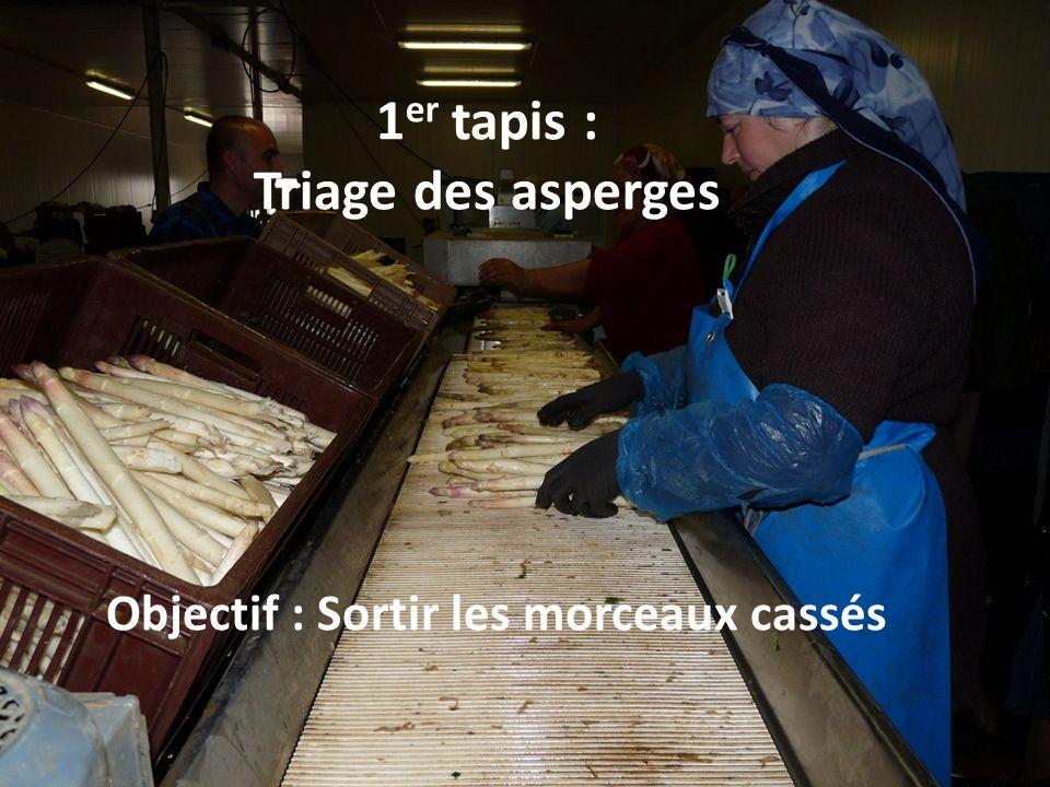 1er tapis : Triage des asperges