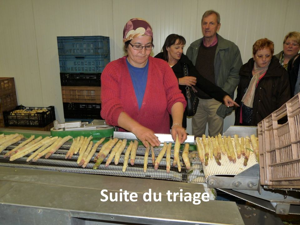 Suite du triage