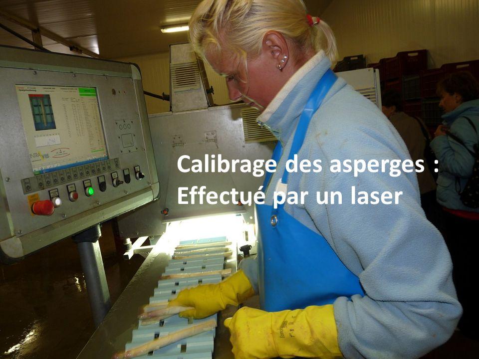 Calibrage des asperges :