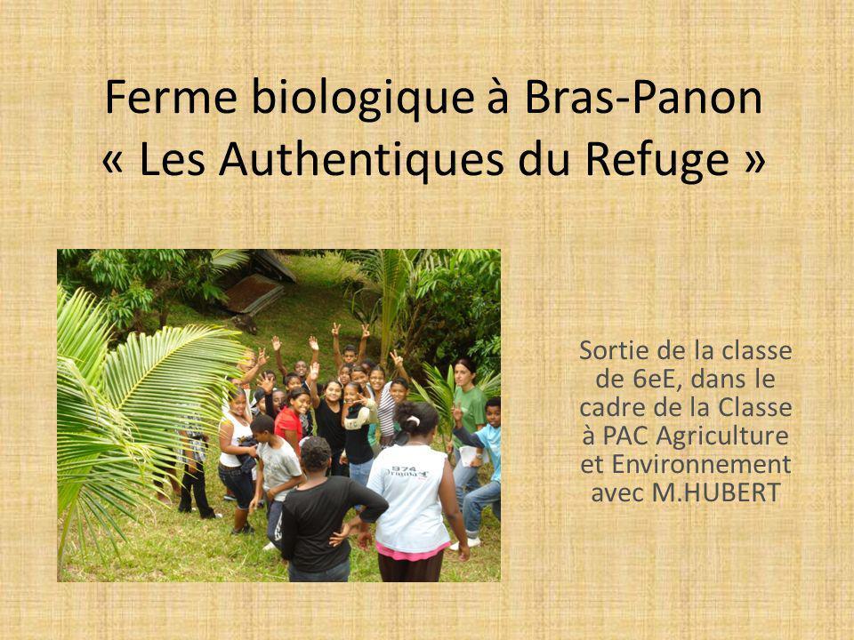 Ferme biologique à Bras-Panon « Les Authentiques du Refuge »