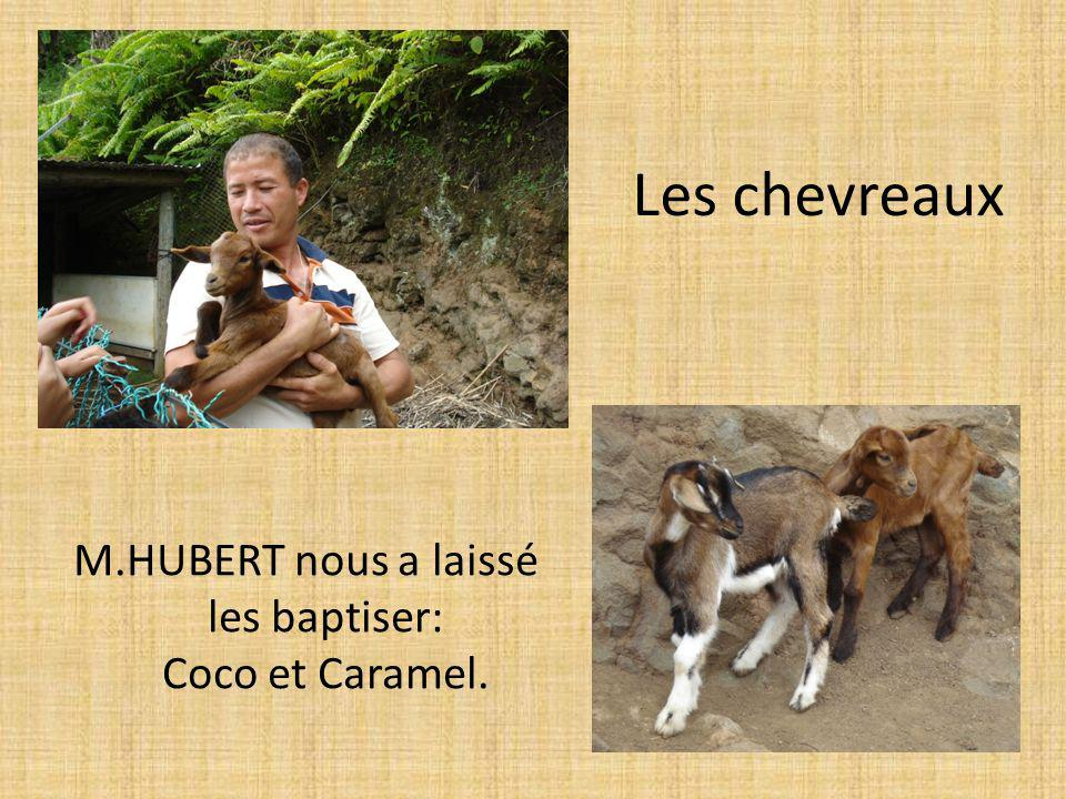 M.HUBERT nous a laissé les baptiser: Coco et Caramel.