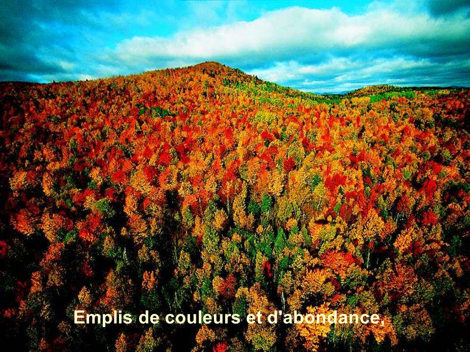 Emplis de couleurs et d abondance,