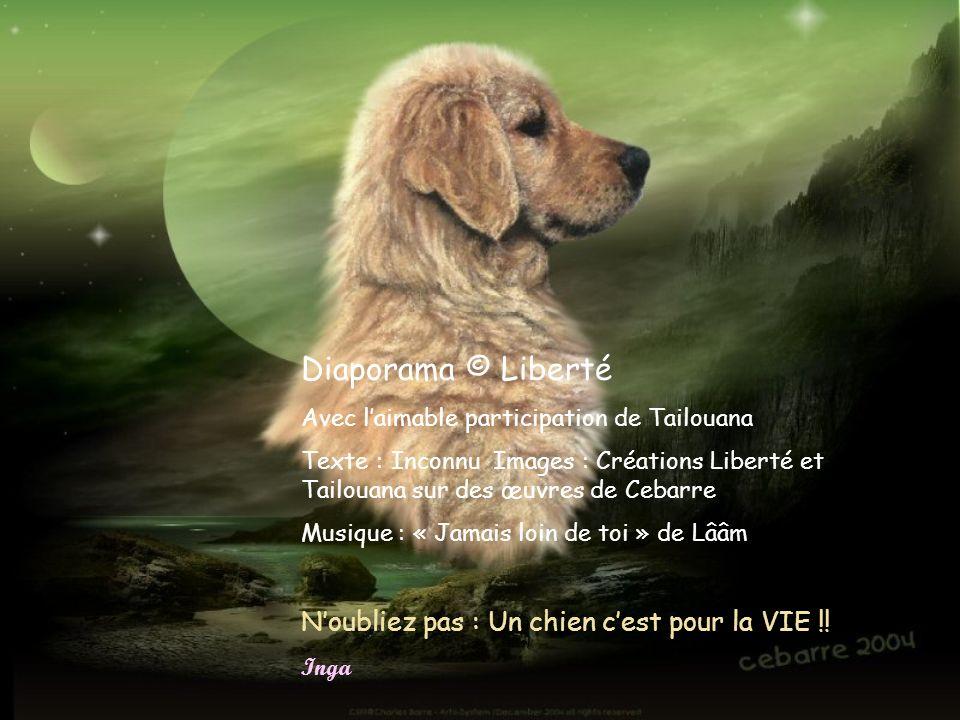 Diaporama © Liberté N'oubliez pas : Un chien c'est pour la VIE !!