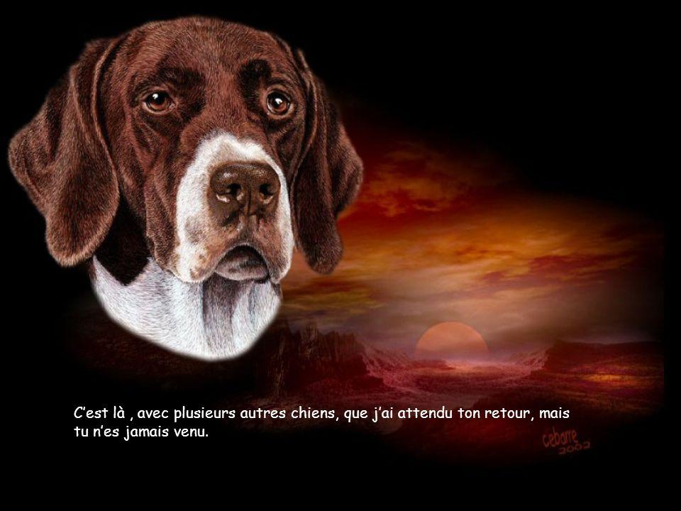 C'est là , avec plusieurs autres chiens, que j'ai attendu ton retour, mais tu n'es jamais venu.
