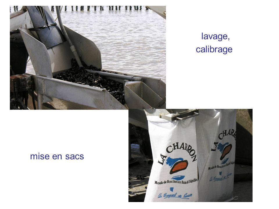 lavage, calibrage mise en sacs