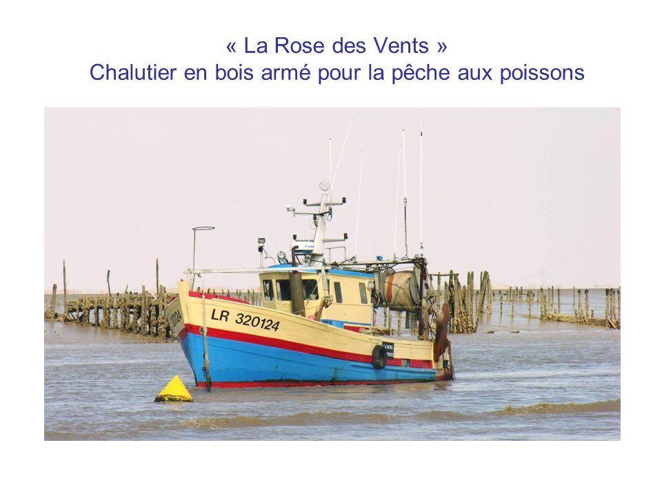 « La Rose des Vents » Chalutier en bois armé pour la pêche aux poissons