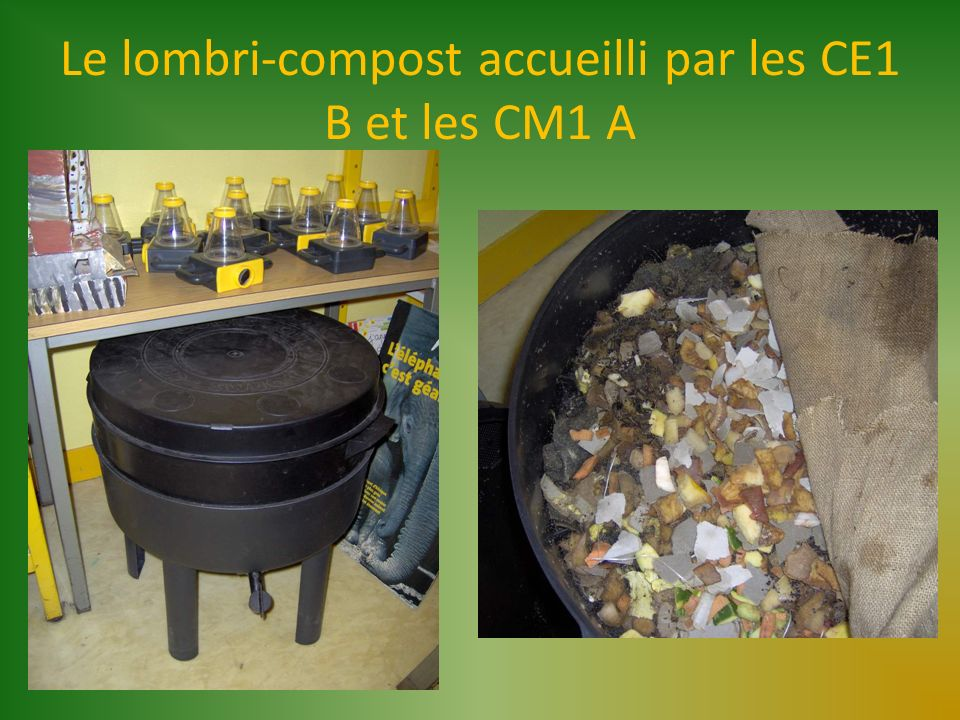 Le lombri-compost accueilli par les CE1 B et les CM1 A