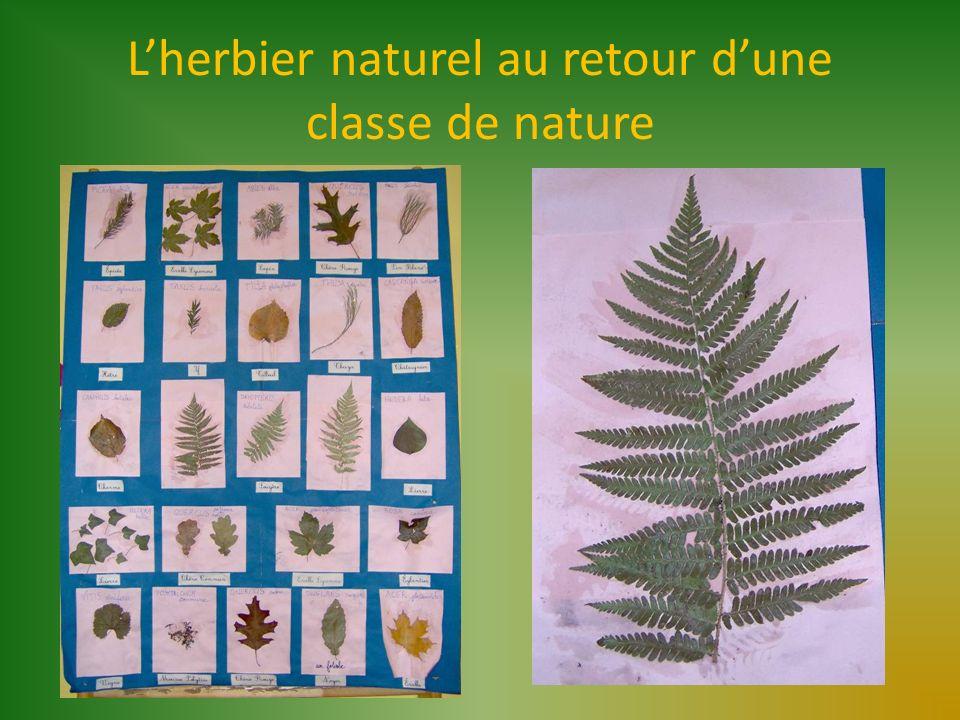 L'herbier naturel au retour d'une classe de nature