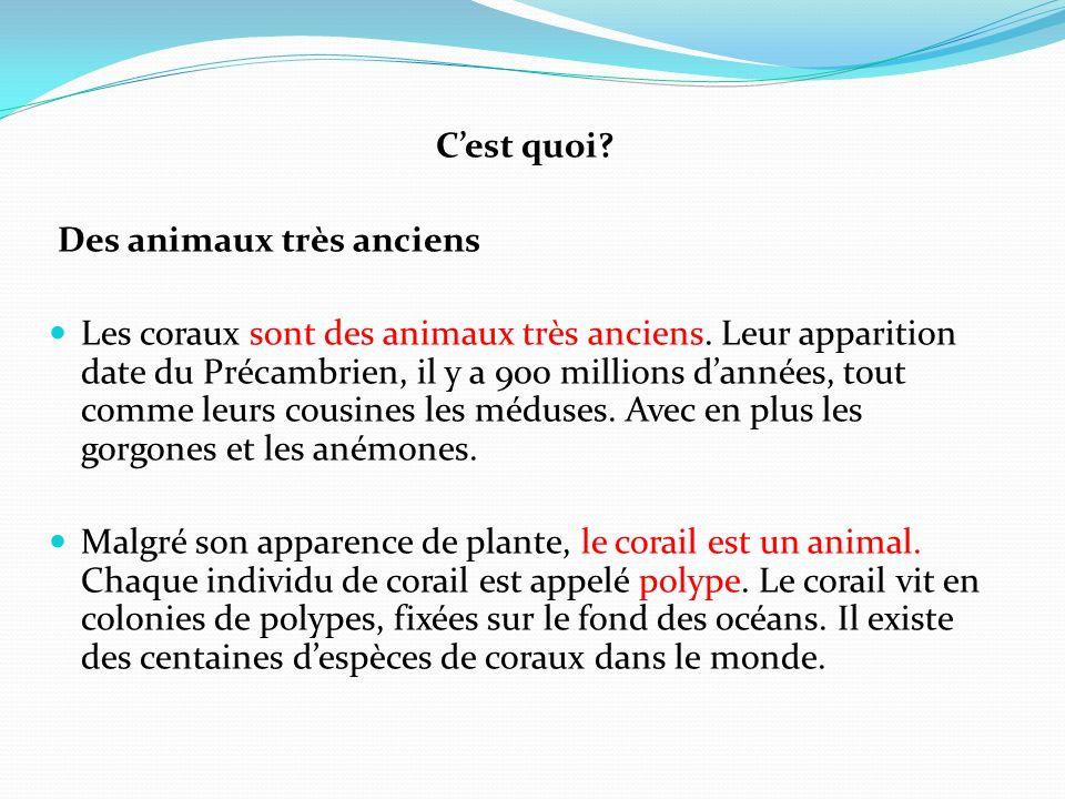 C'est quoi Des animaux très anciens.