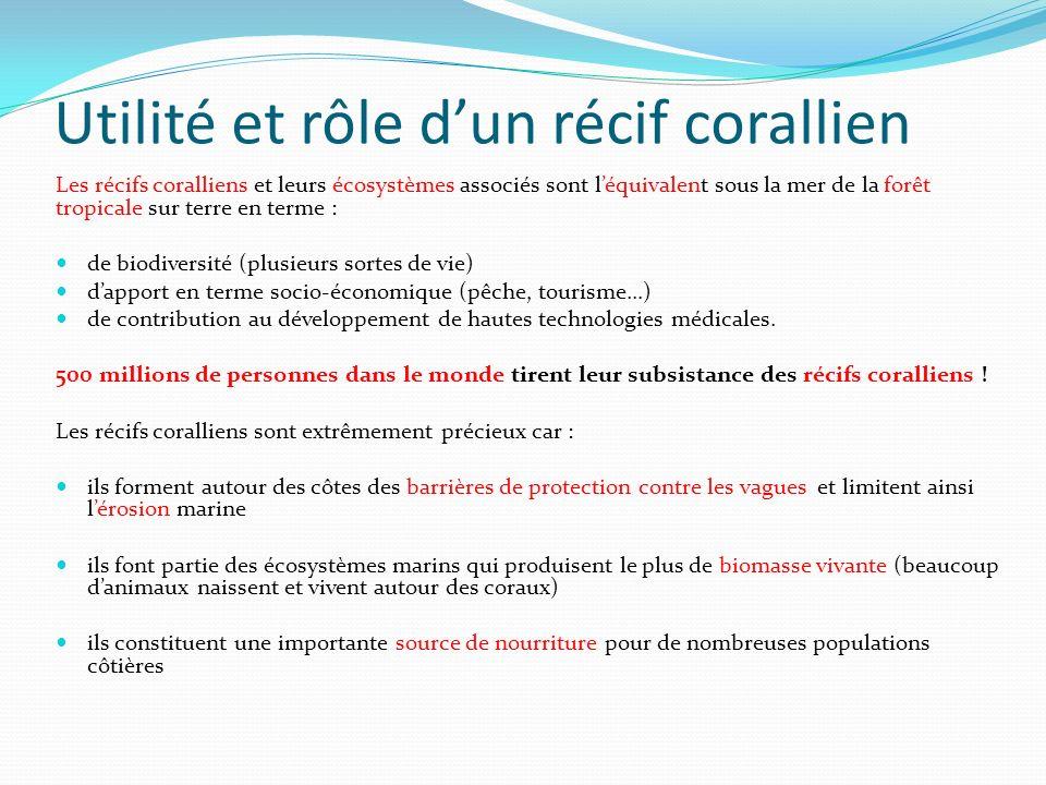 Utilité et rôle d'un récif corallien