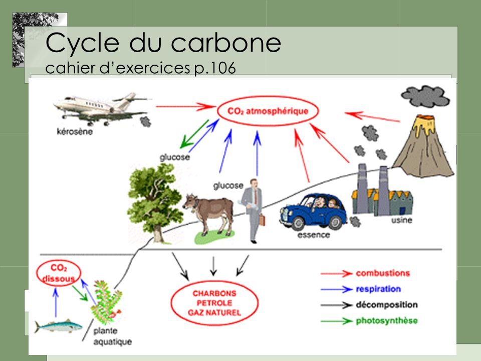 Cycle du carbone cahier d'exercices p.106