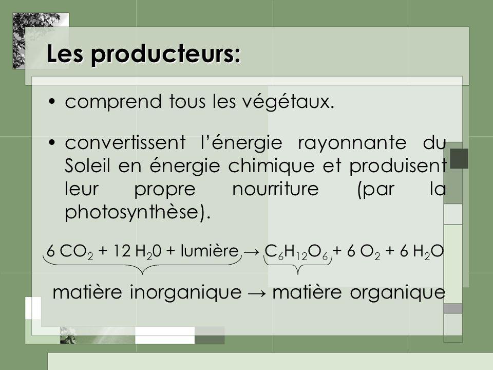 Les producteurs: matière inorganique → matière organique