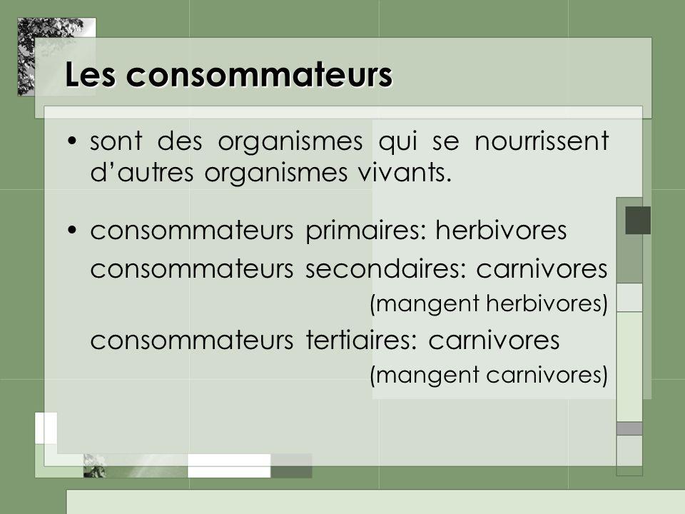 Les consommateurs sont des organismes qui se nourrissent d'autres organismes vivants. consommateurs primaires: herbivores.