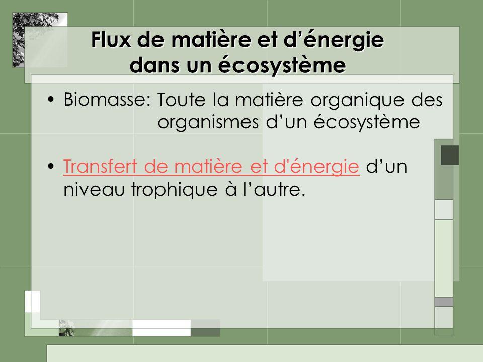 Flux de matière et d'énergie dans un écosystème