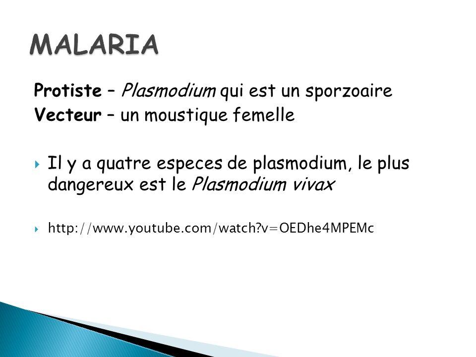 MALARIA Protiste – Plasmodium qui est un sporzoaire