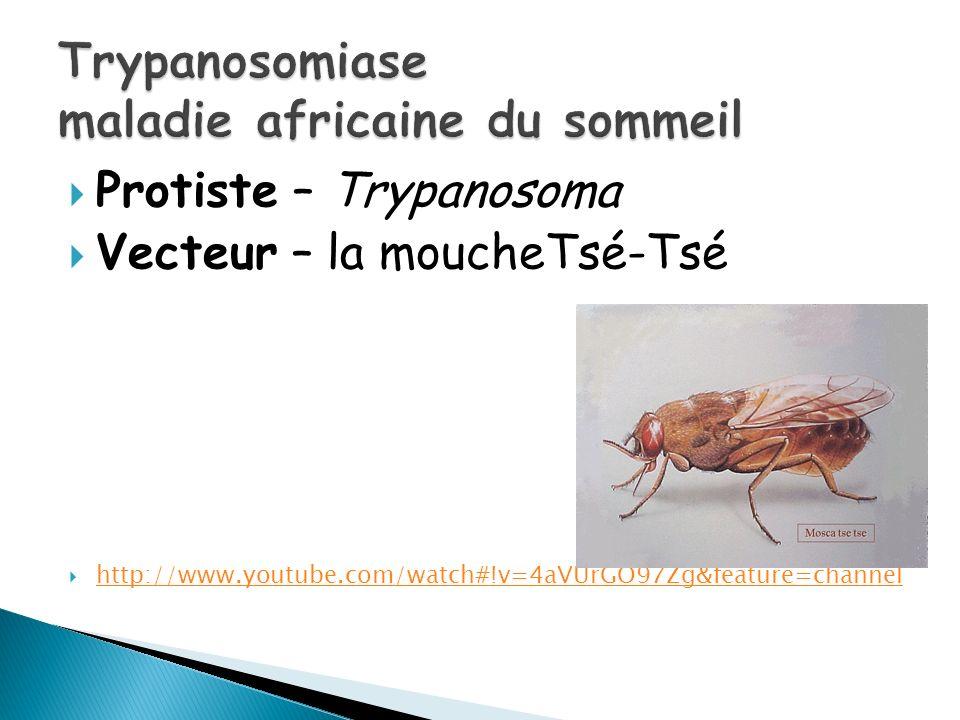Trypanosomiase maladie africaine du sommeil