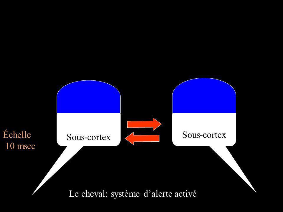 Cortex Cortex Échelle 10 msec Sous-cortex Sous-cortex Le cheval: système d'alerte activé
