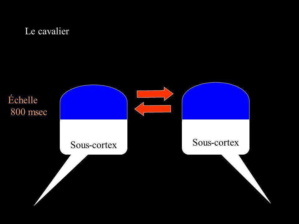 Le cavalier Cortex Échelle 800 msec Cortex Sous-cortex Sous-cortex