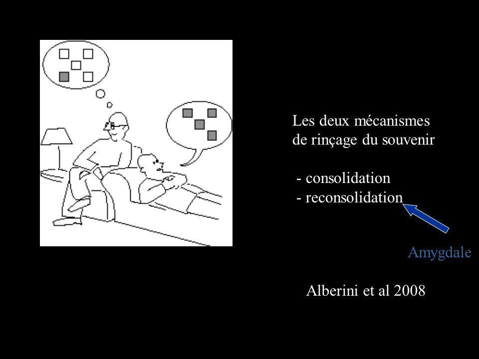 Les deux mécanismes de rinçage du souvenir. - consolidation.