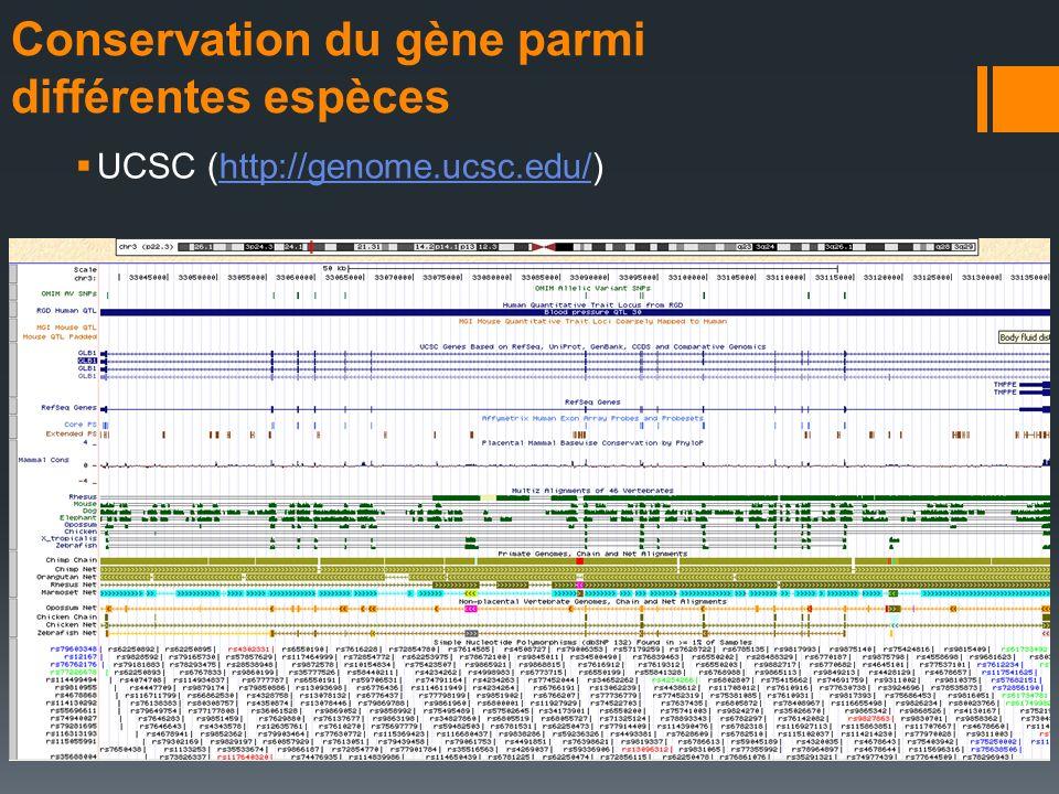 Conservation du gène parmi différentes espèces