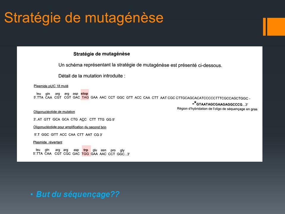 Stratégie de mutagénèse