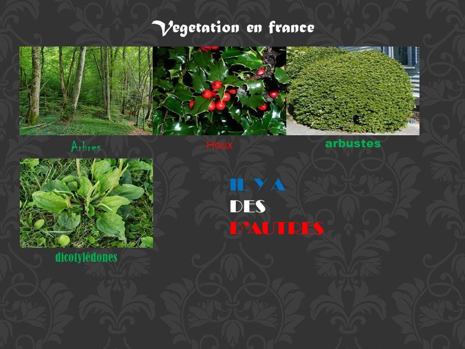 Vegetation en france IL Y A DES D'AUTRES Arbres Houx arbustes