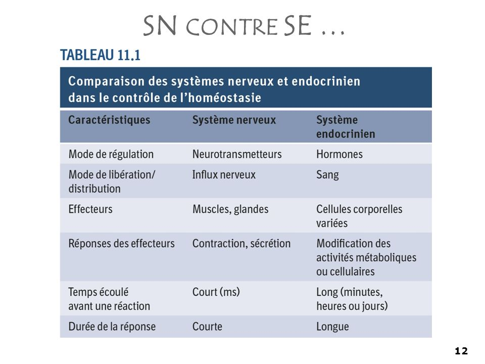 SN contre SE … Les deux contrôle l'homéostasie mais différemment.