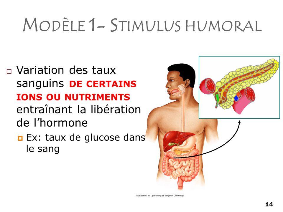 Modèle 1- Stimulus humoral
