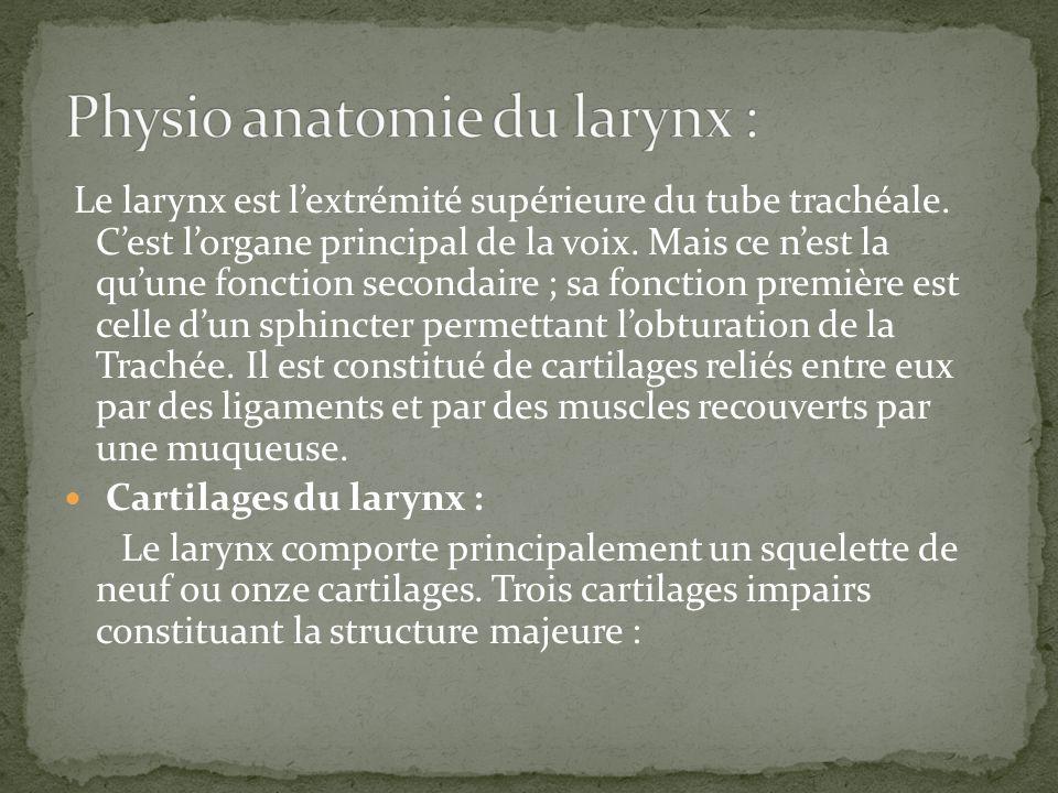 Physio anatomie du larynx :