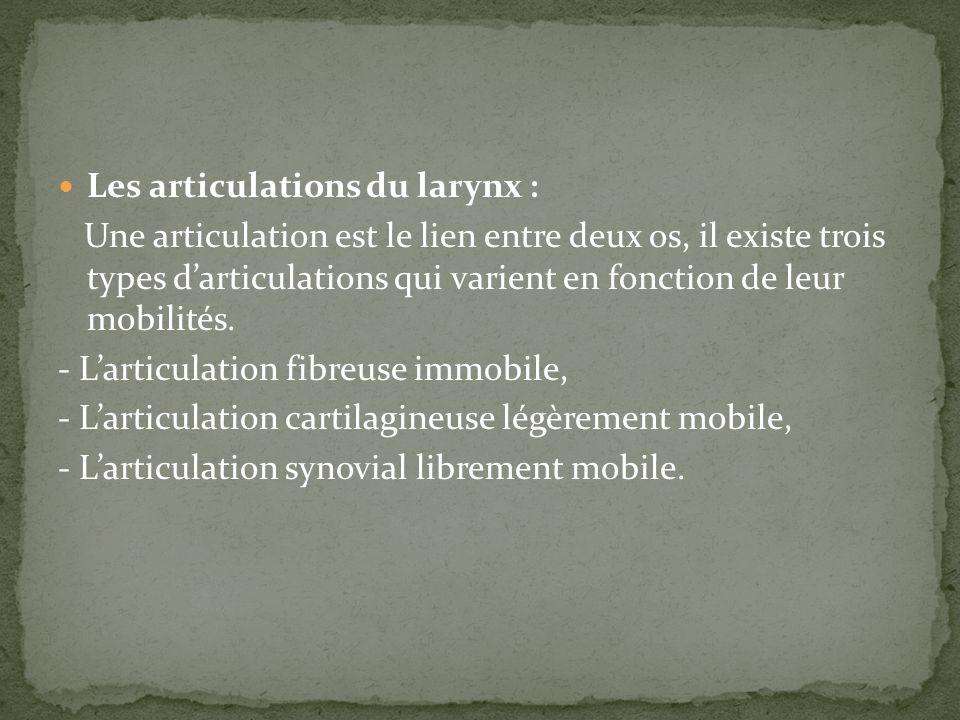 Les articulations du larynx :