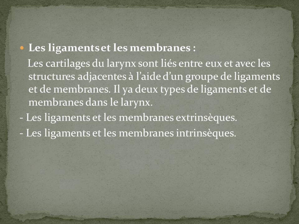 Les ligaments et les membranes :