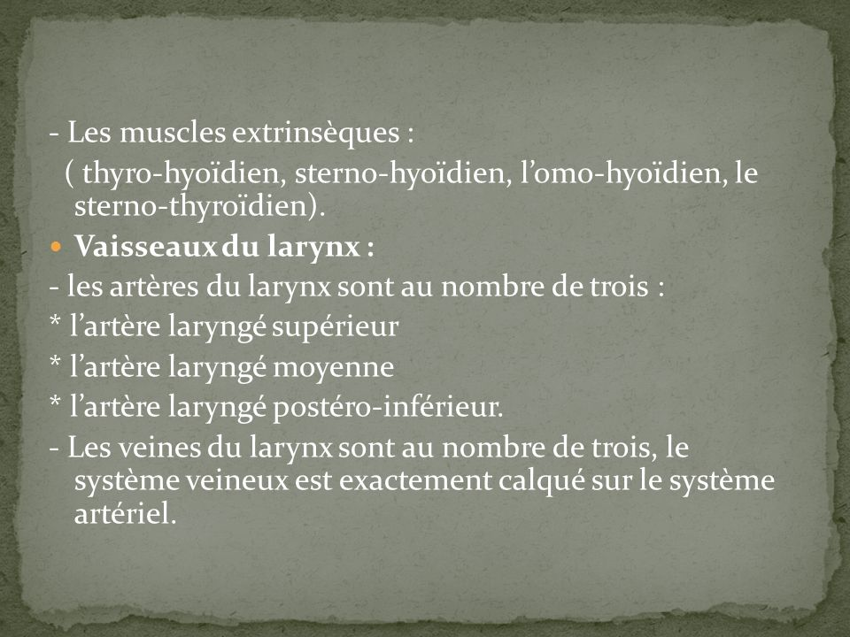 - Les muscles extrinsèques :