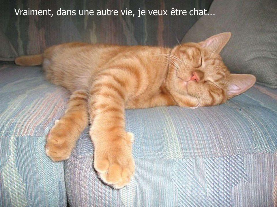 Vraiment, dans une autre vie, je veux être chat...