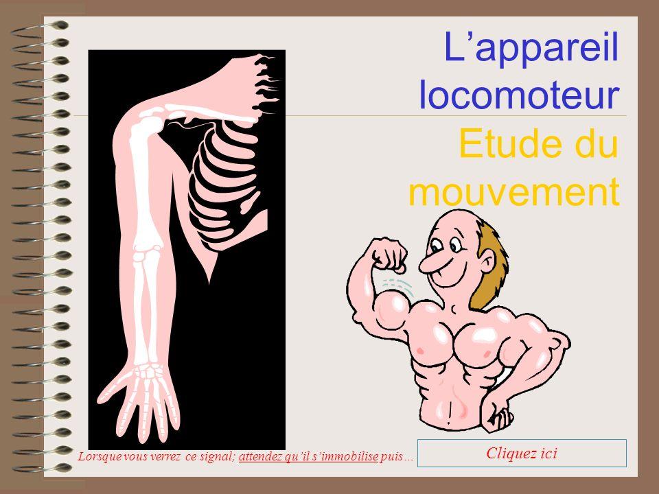 L'appareil locomoteur Etude du mouvement