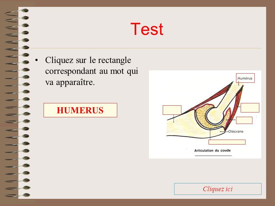 Test Cliquez sur le rectangle correspondant au mot qui va apparaître.