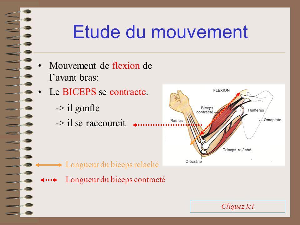 Etude du mouvement Mouvement de flexion de l'avant bras: