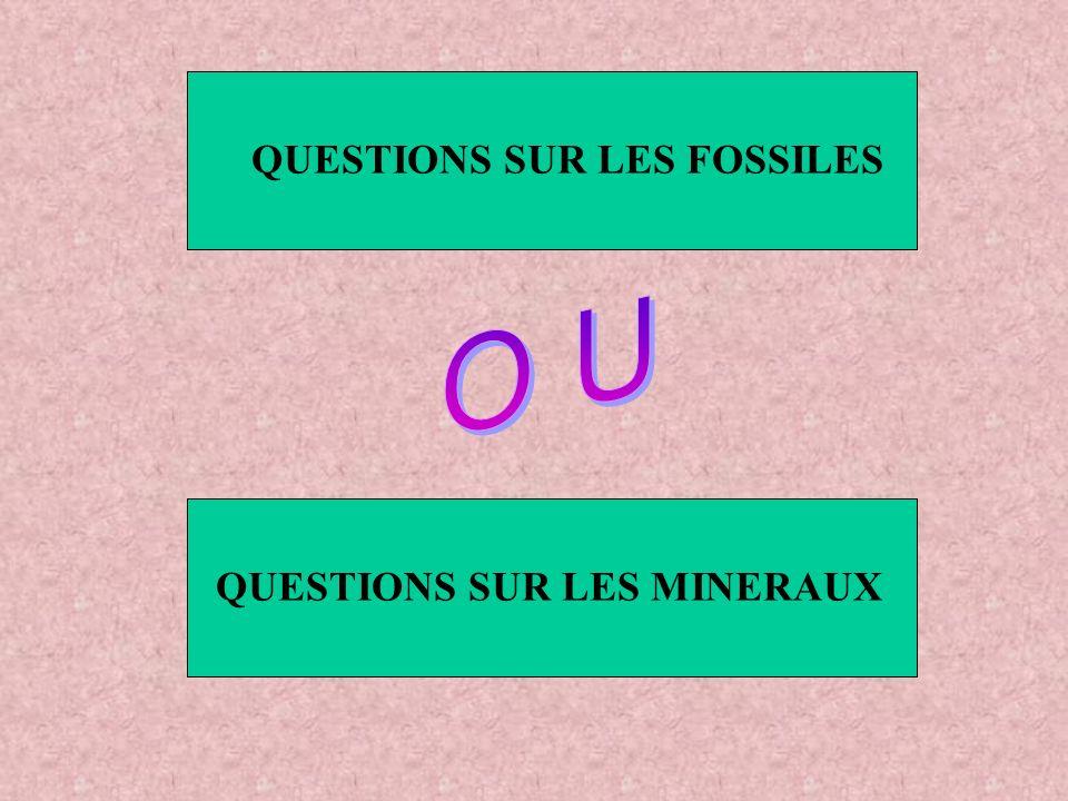 QUESTIONS SUR LES FOSSILES