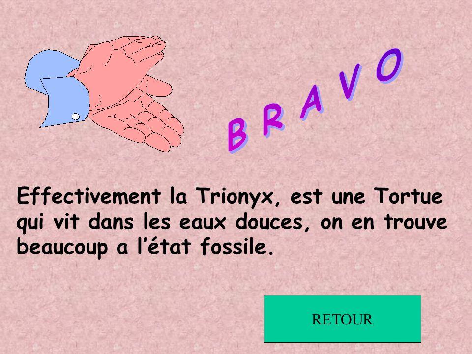 B R A V O Effectivement la Trionyx, est une Tortue