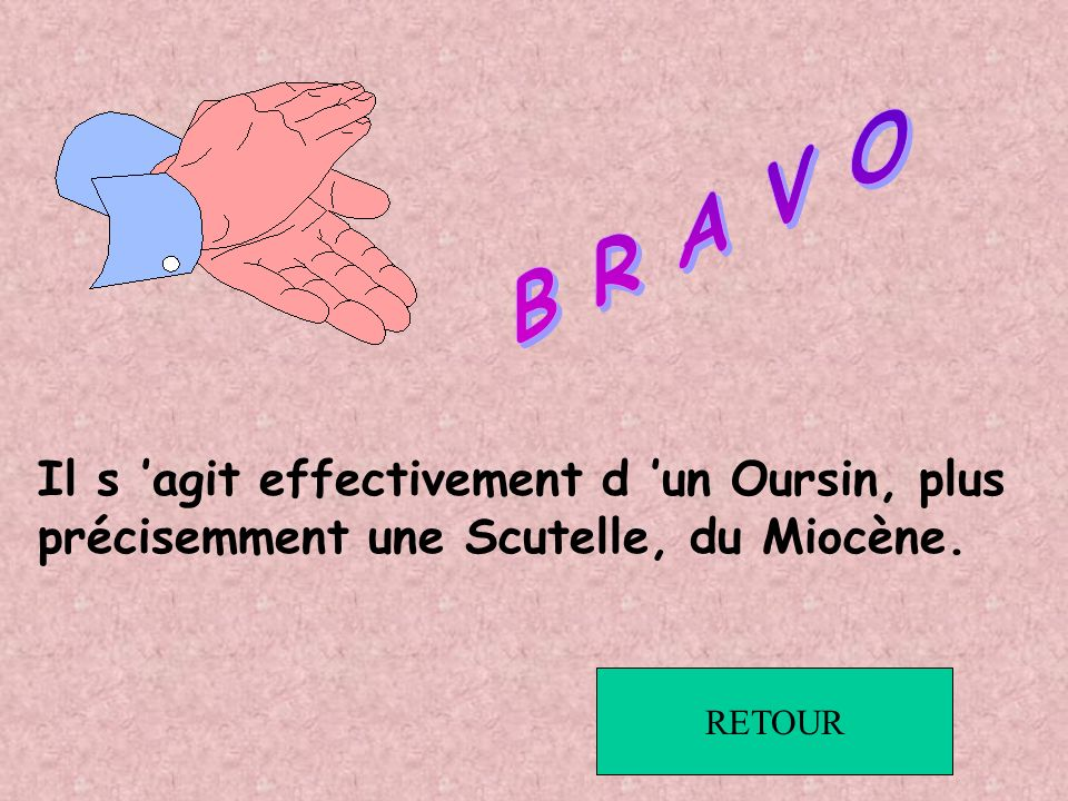 B R A V O Il s 'agit effectivement d 'un Oursin, plus