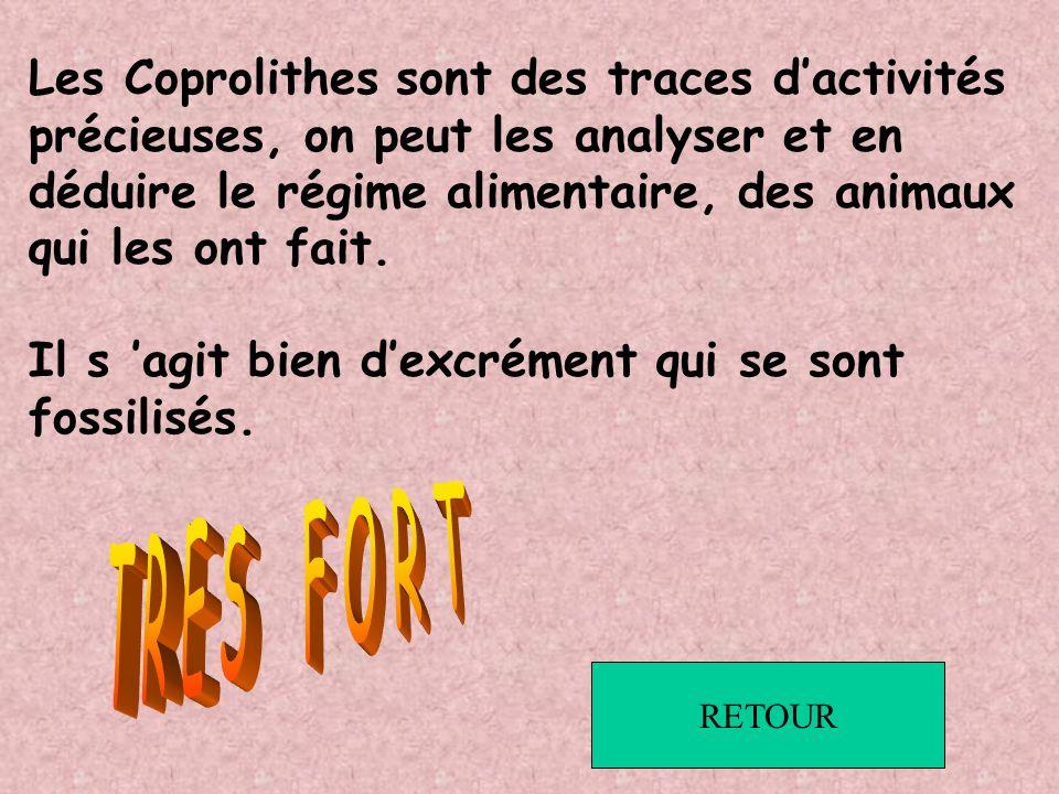 Les Coprolithes sont des traces d'activités