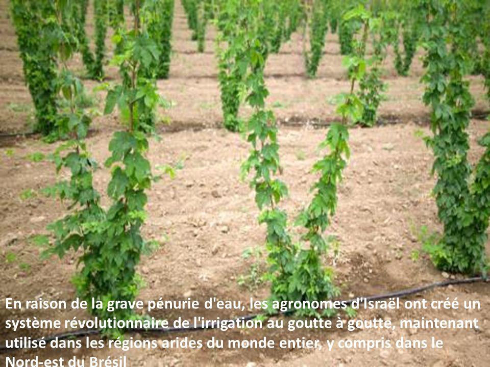 En raison de la grave pénurie d eau, les agronomes d Israël ont créé un système révolutionnaire de l irrigation au goutte à goutte, maintenant utilisé dans les régions arides du monde entier, y compris dans le Nord-est du Brésil