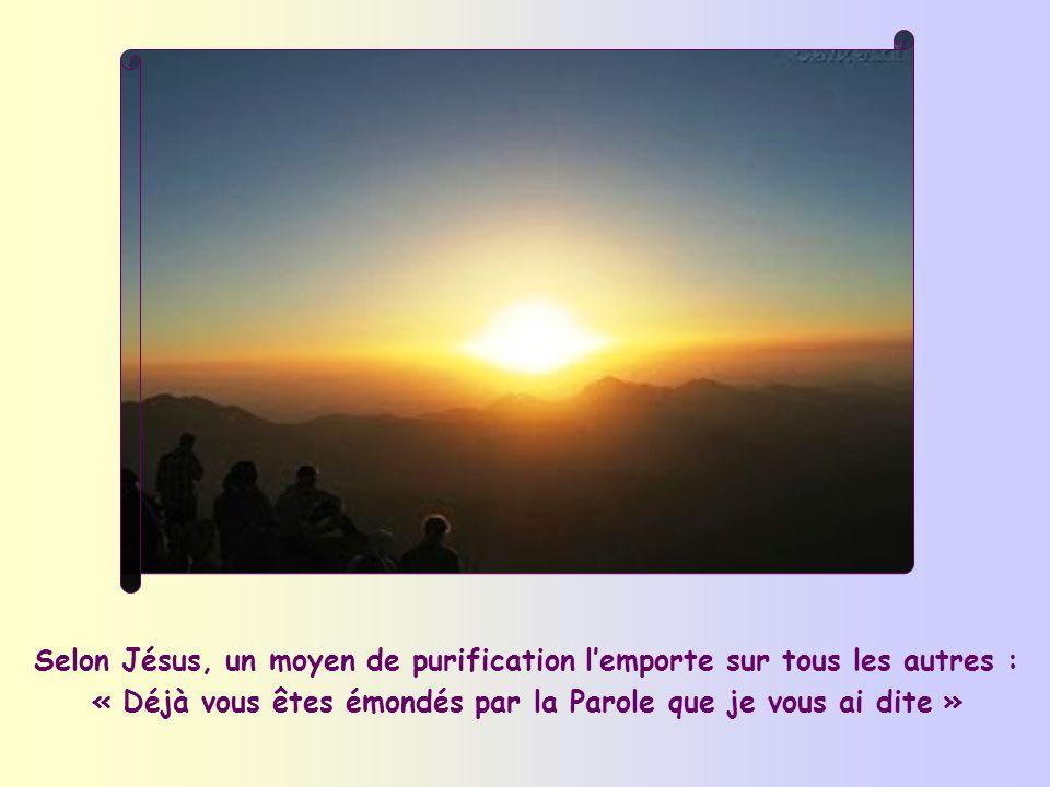 Selon Jésus, un moyen de purification l'emporte sur tous les autres : « Déjà vous êtes émondés par la Parole que je vous ai dite »